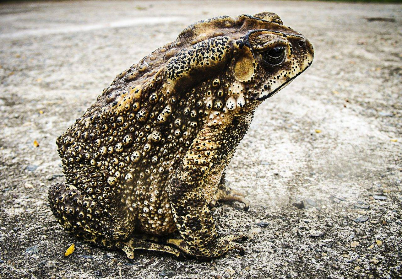 toad-silver-bay-anglesey-north-wales-holiday-village-1280x889.jpg