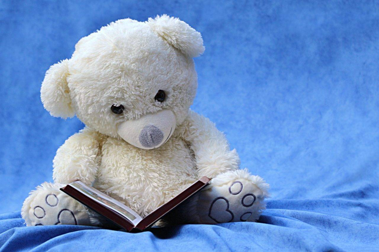 Teddy-reading-a-book-silver-bay-holiday-village-anglese-1280x853.jpg