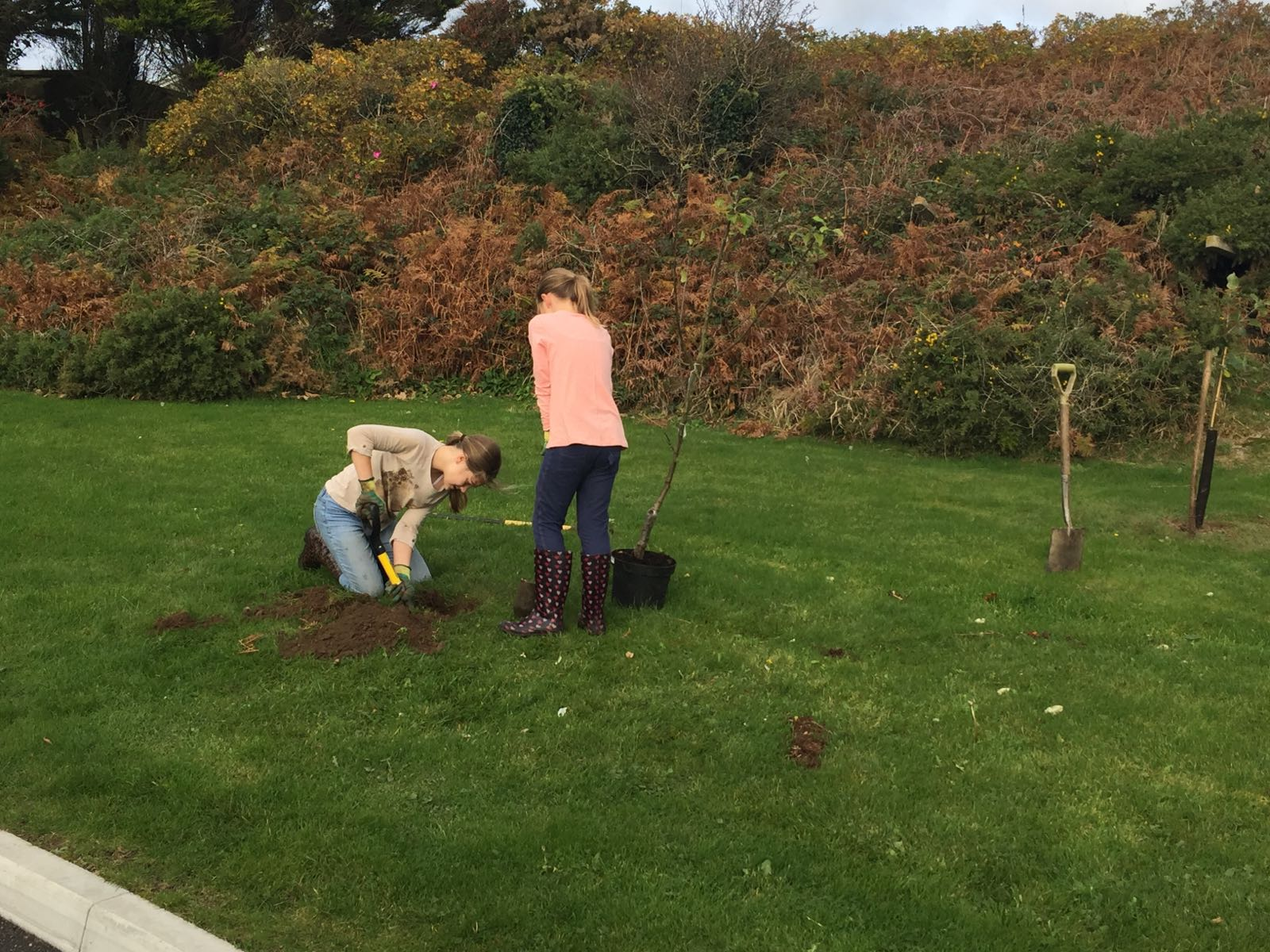 Tree planting, Silver Bay Holiday Village, Anglesey, North Wales