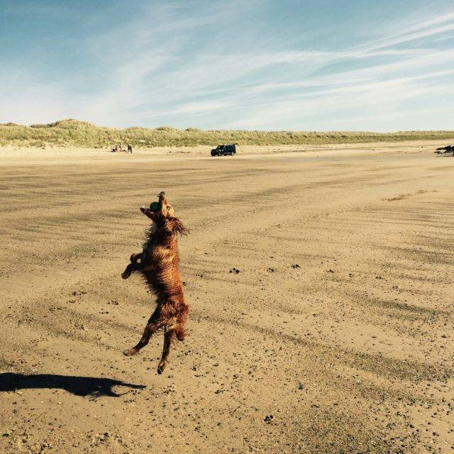 http://silverbay.co.uk/wp-content/uploads/2016/12/silver-bay-holiday-village-anglesey-dog-jumping-beach-640x640.jpg