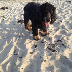 silver-bay-holiday-village-anglesey-dog-beach-sand