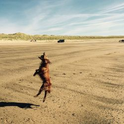silver-bay-holiday-village-anglesey-dog-jumping-beach