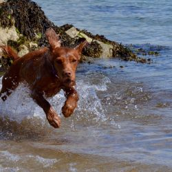 silver-bay-holiday-village-anglesey-dog-waves-run