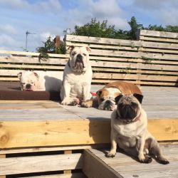 silver-bay-holiday-village-anglesey-group-dogs-decking